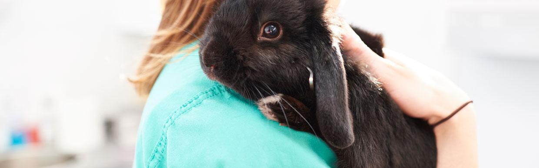 Rabbit awareness week!